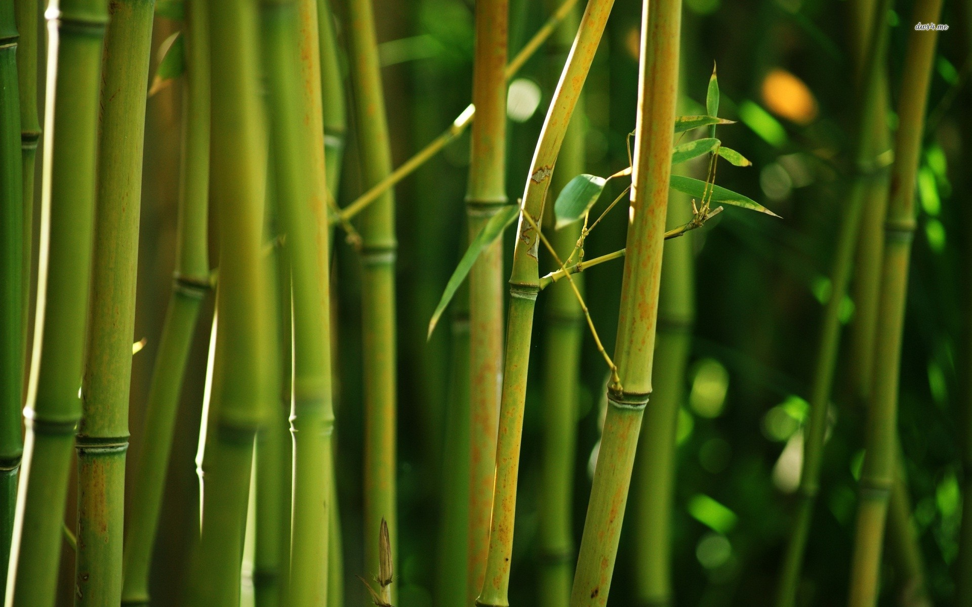 11793-bamboo-forest-1920×1200-nature-wallpaper | good vibes radio